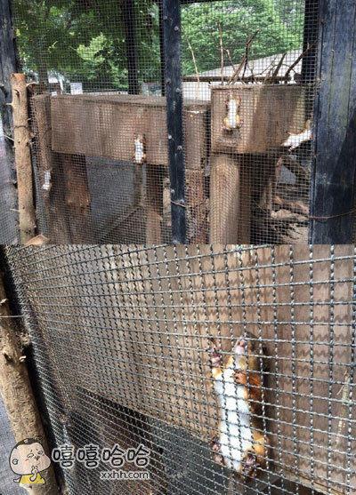 动物公园收到游客反馈说好多松鼠都被卡住了,动物园方表示,它们自己出的来