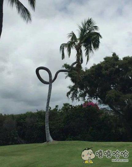 一棵脱离了低级趣味的树。