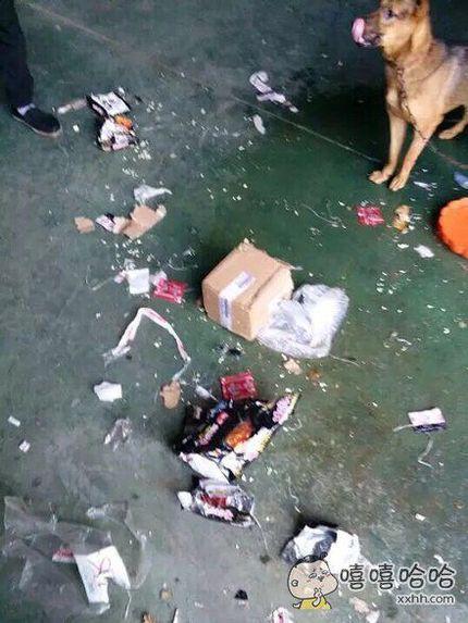 网上买了一包火鸡面,全让狗啃了!