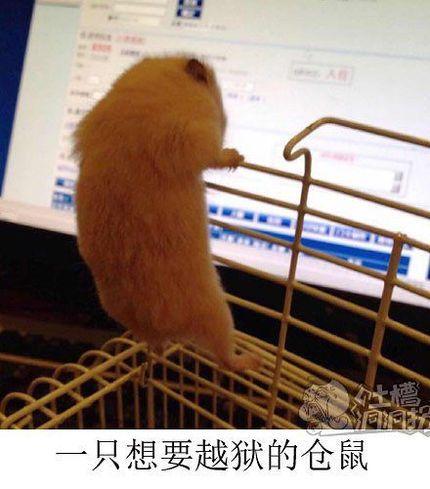 一只想要越狱的仓鼠