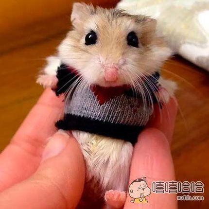 天气冷了,麻麻给我穿上了毛衣
