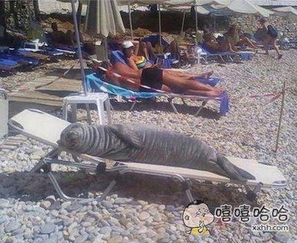 沙滩上看到这,我也是惊呆了