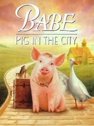 小猪宝贝2