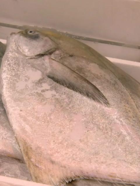 筑地 深入世界上最大的鱼市场